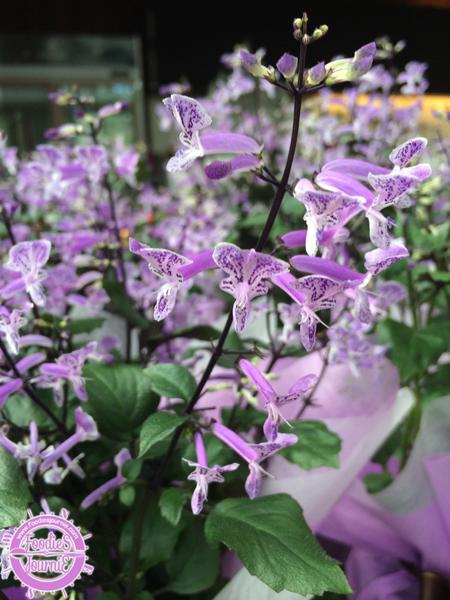 d orchid